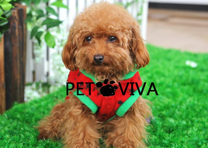 【PET VIVA】超萌西瓜太郎連帽 小狗衣服寵物服裝